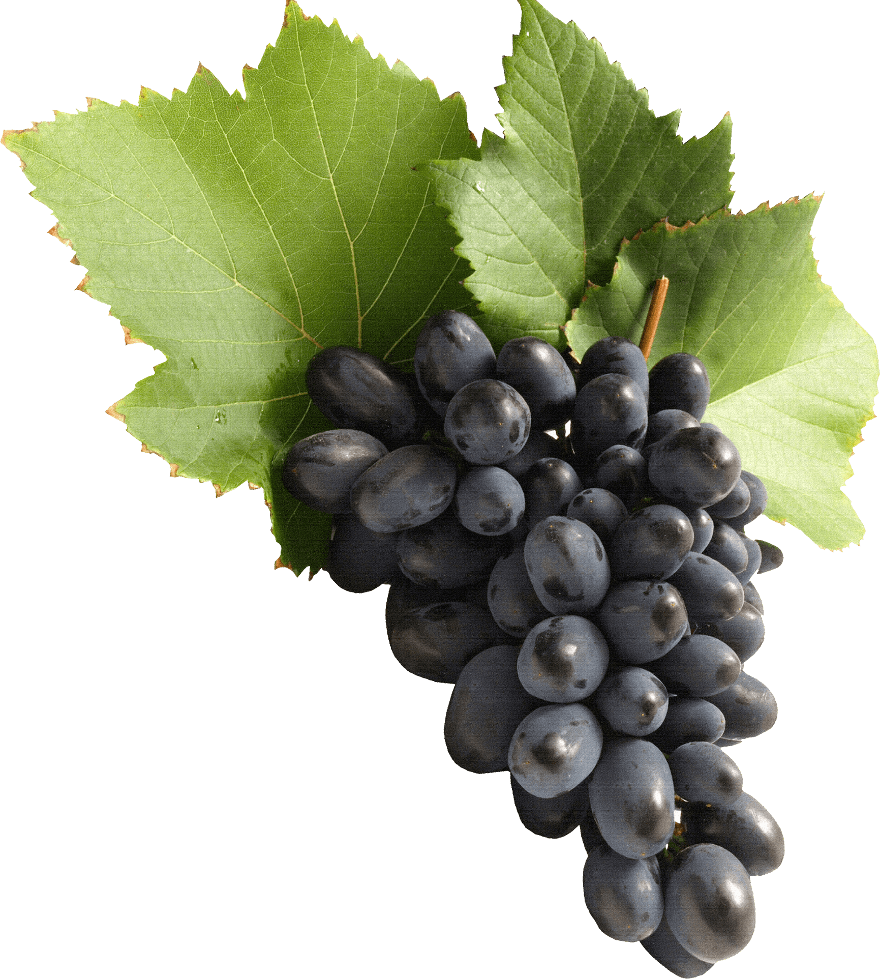 Png images stickpng blue. Transparent grapes high quality black and white stock