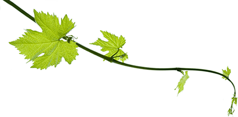 Http cookstavern com index. Grape vines png image freeuse library