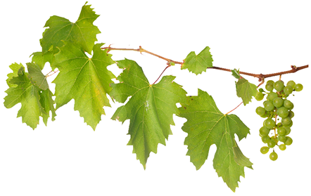 Events . Grape vines png picture freeuse download