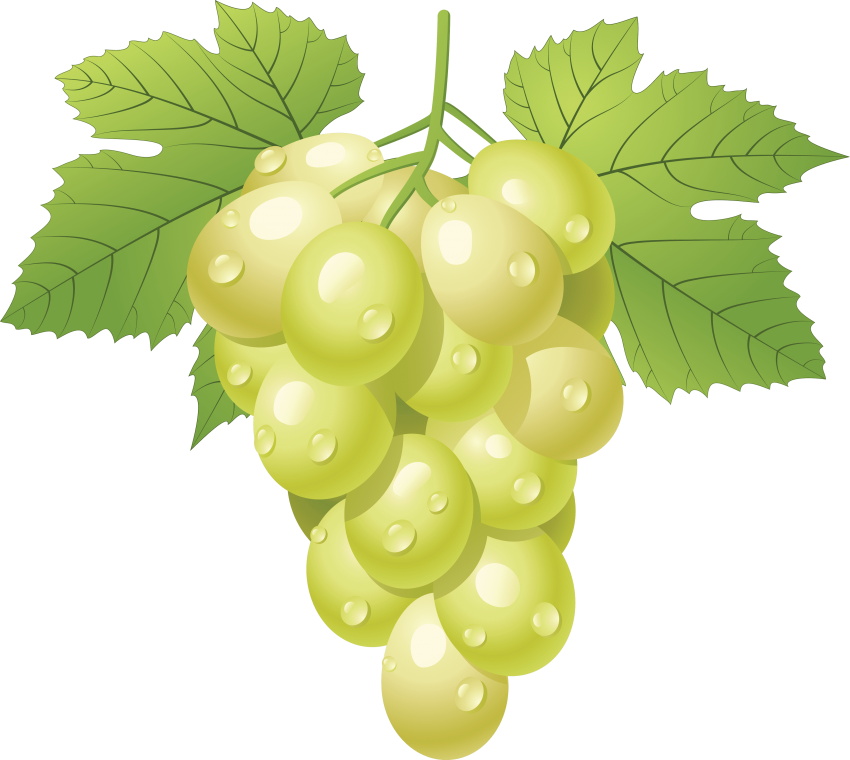 Transparent grapes one. Download green clipart png