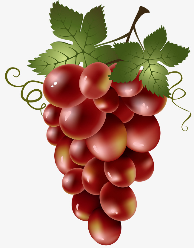 Grapes clipart bunch grape. A of red leaves