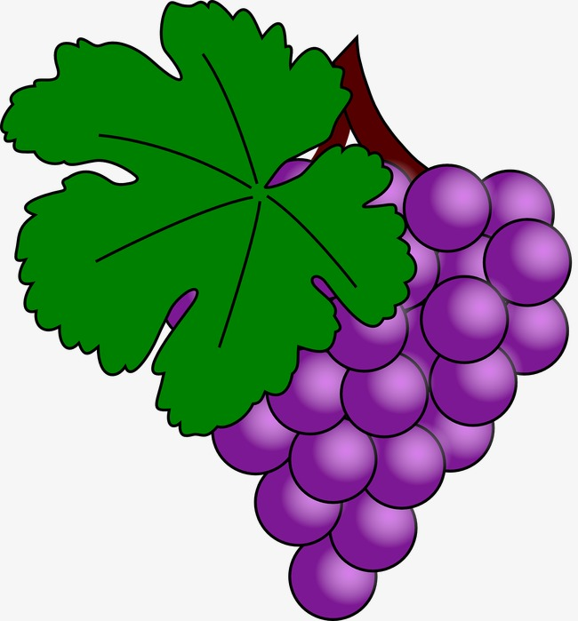 Grapes clipart bunch grape. Of with leaves fruit