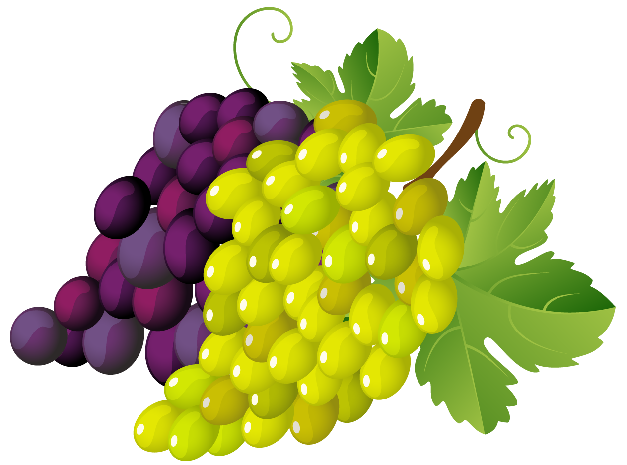 Grapes clipart png. Painted gallery yopriceville high