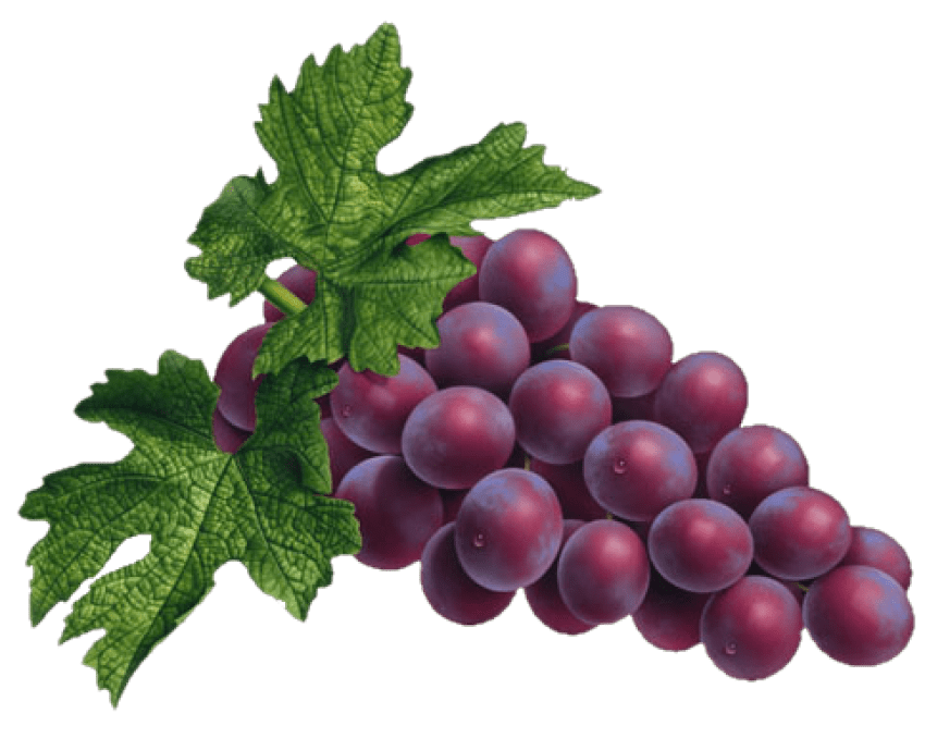 transparent grapes name