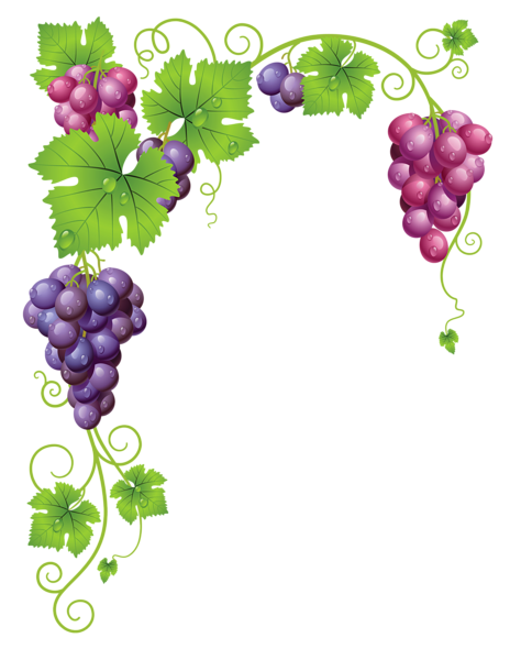 Grapevine vector frame. Pin by ng nee