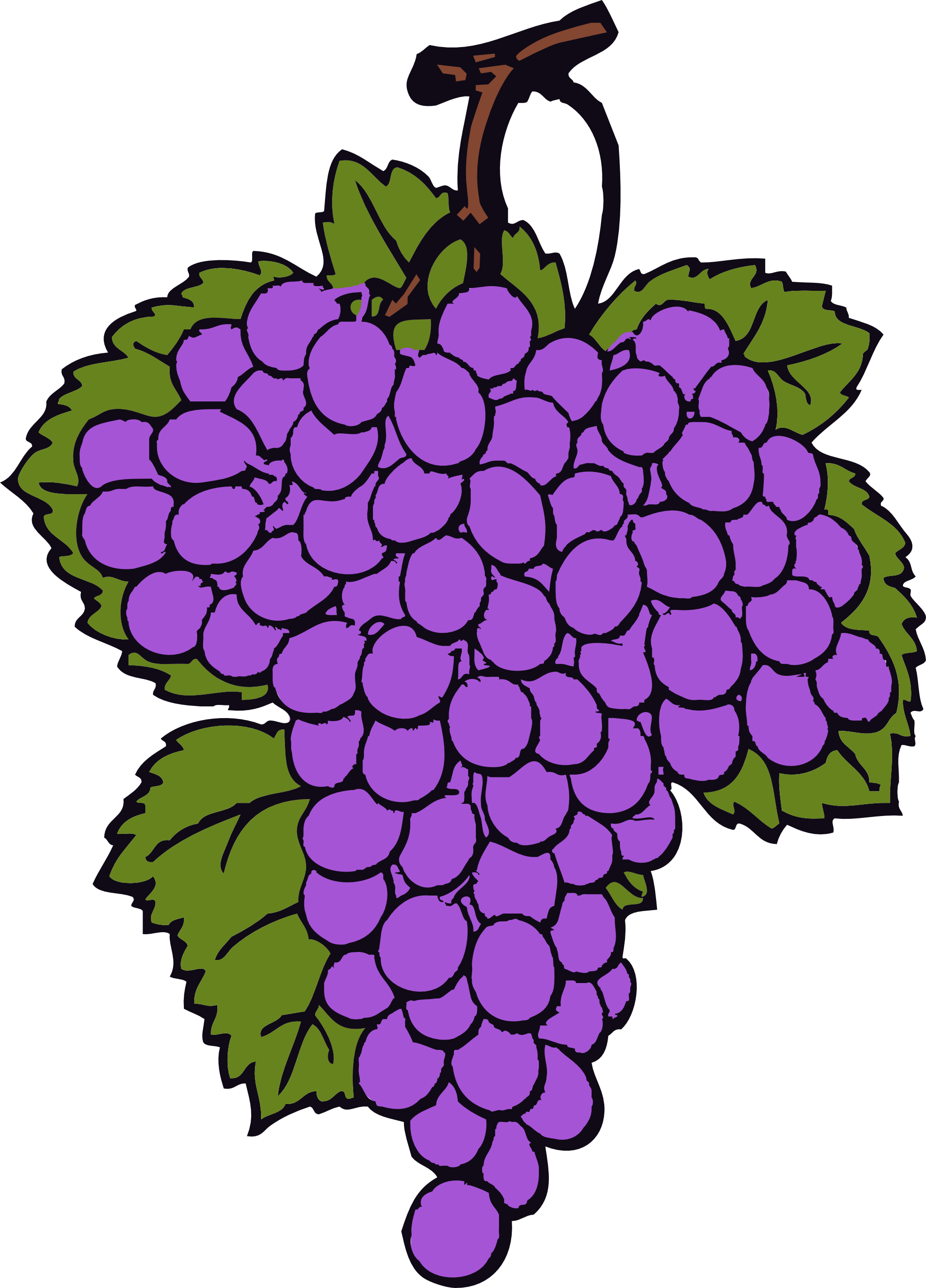 Grapevine vector template. Collection of free grype