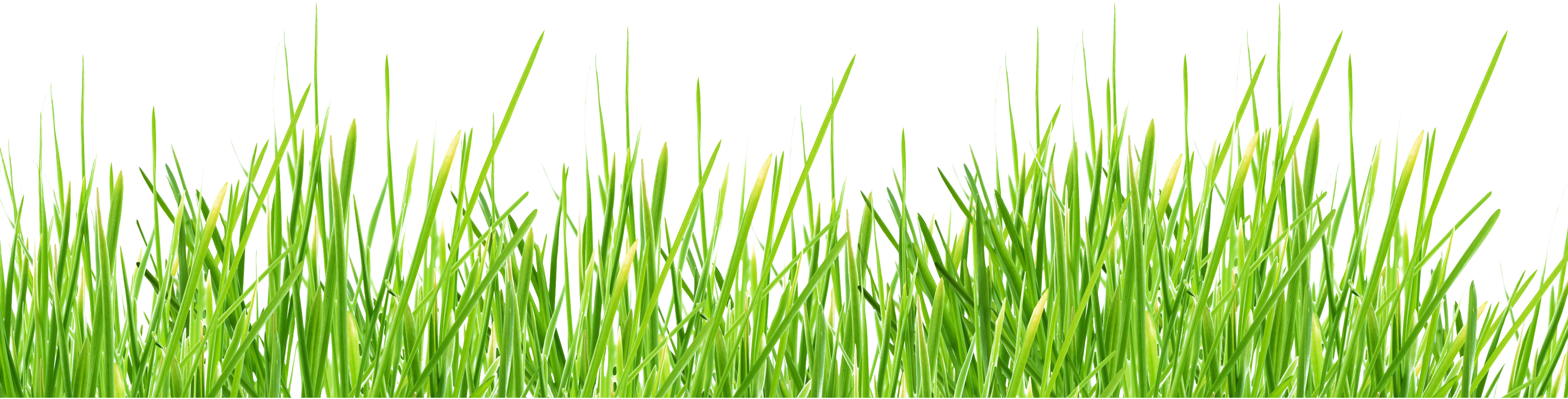 Football grass png. Images pictures image green