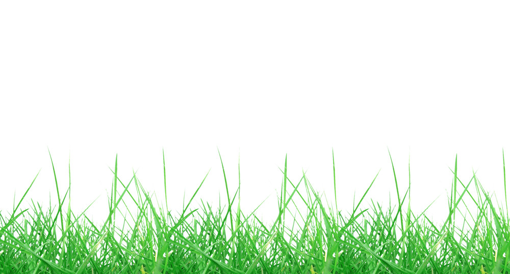 Grass background transparent. Green meadow isolated over