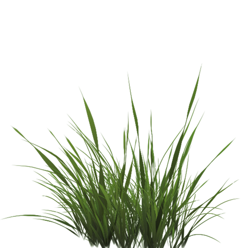 Grass blade texture png. Tall transparent pictures free