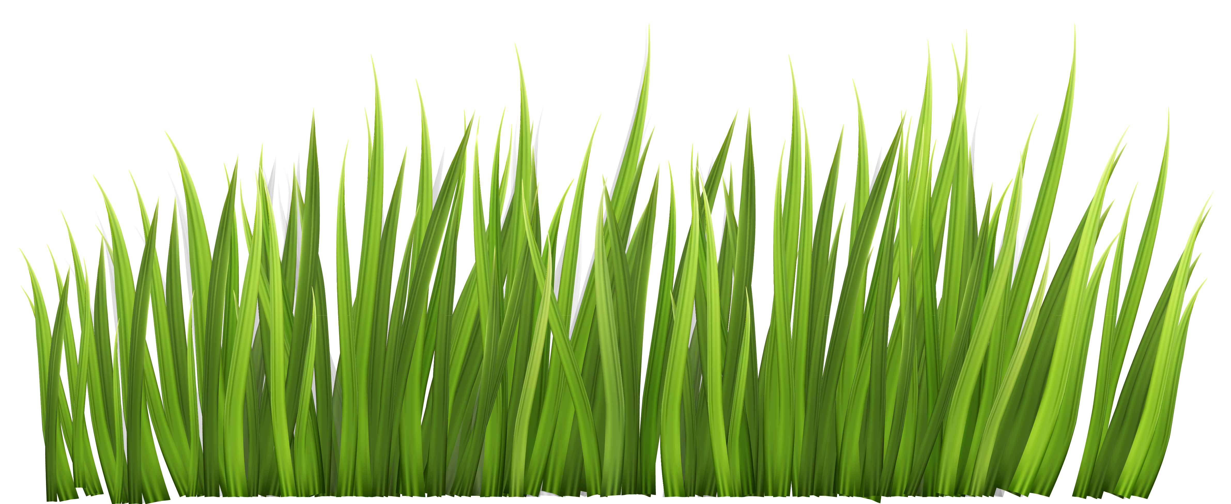Grass blade texture png. Exellent view full size
