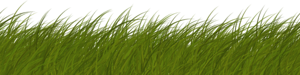Grass blade texture png. Blades alpha card side