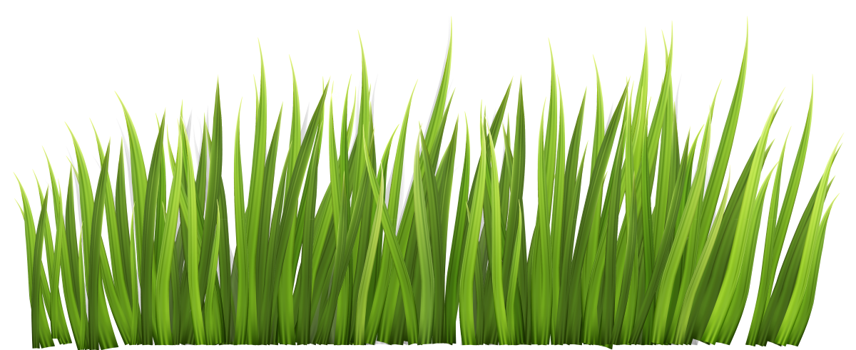 Lawn vector sea grass. Water conservation city of