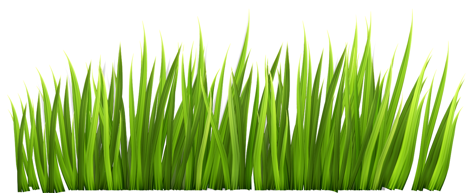 Ground clear background grass