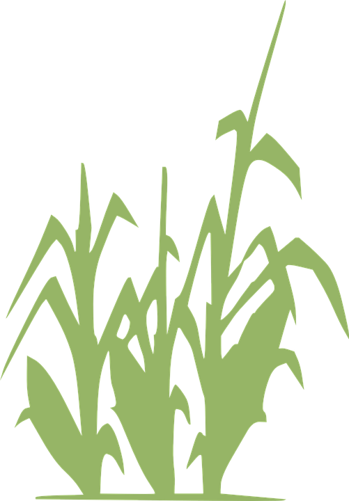 Grass clipart row. Free crop rows cliparts