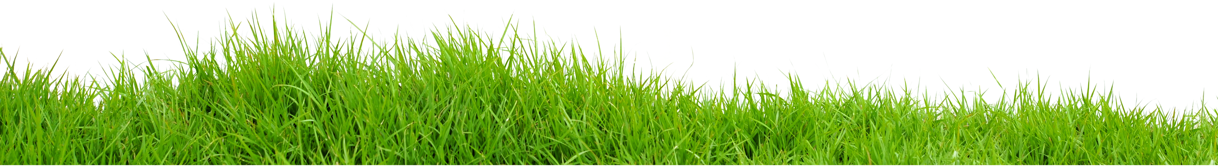 Vector grass png. Field images transparent free