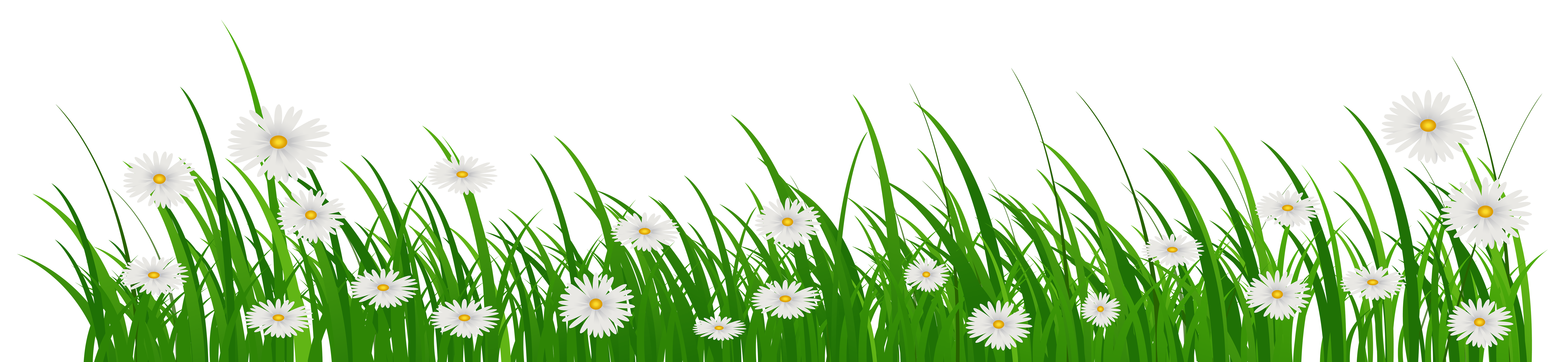 Grass flowers png. With clip art image