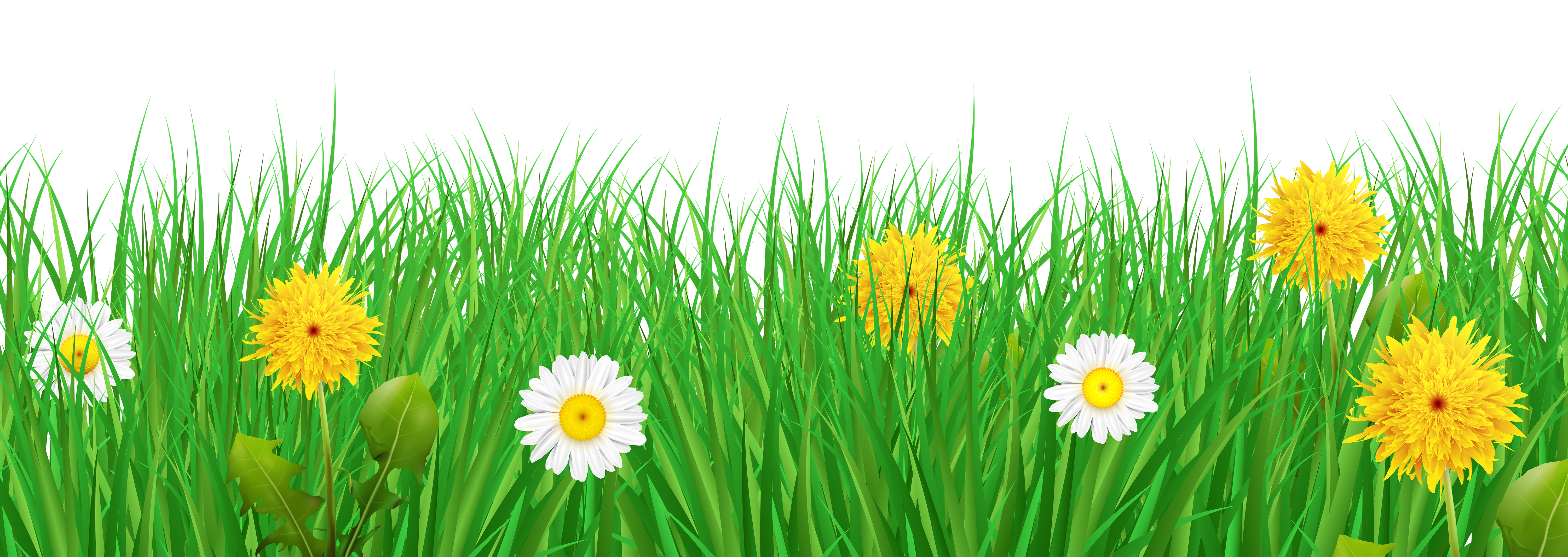 Grass flowers png. And transparent clip art