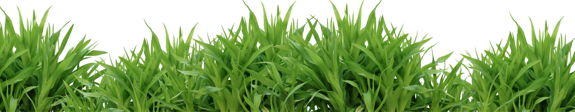 Grass png. Images pictures image green