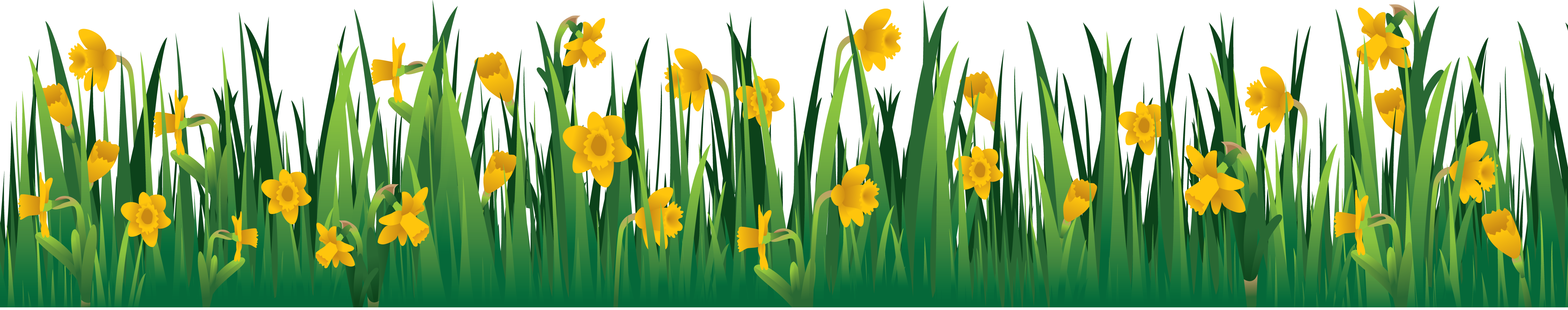 Grass flowers png. Images pictures image green