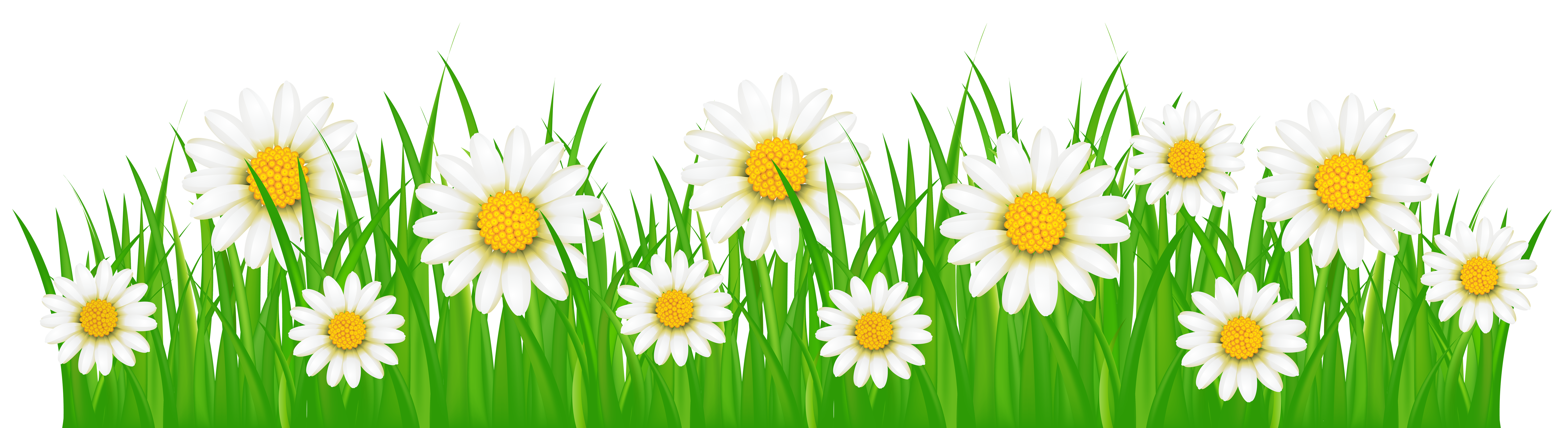 Grass flowers png. Ground with white clip