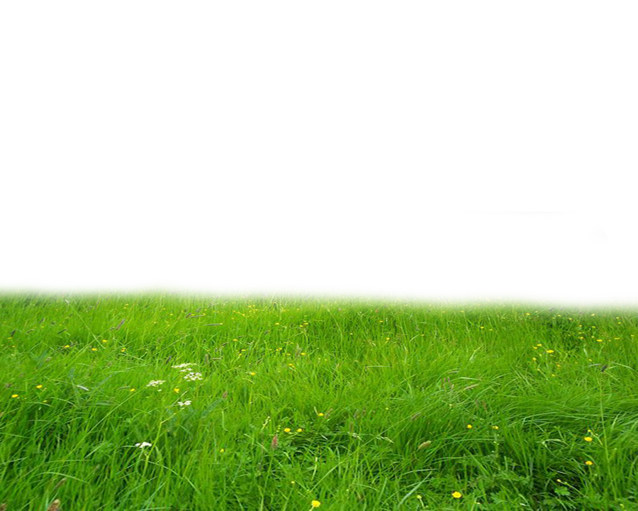 Grass field png. Transparent pictures free icons