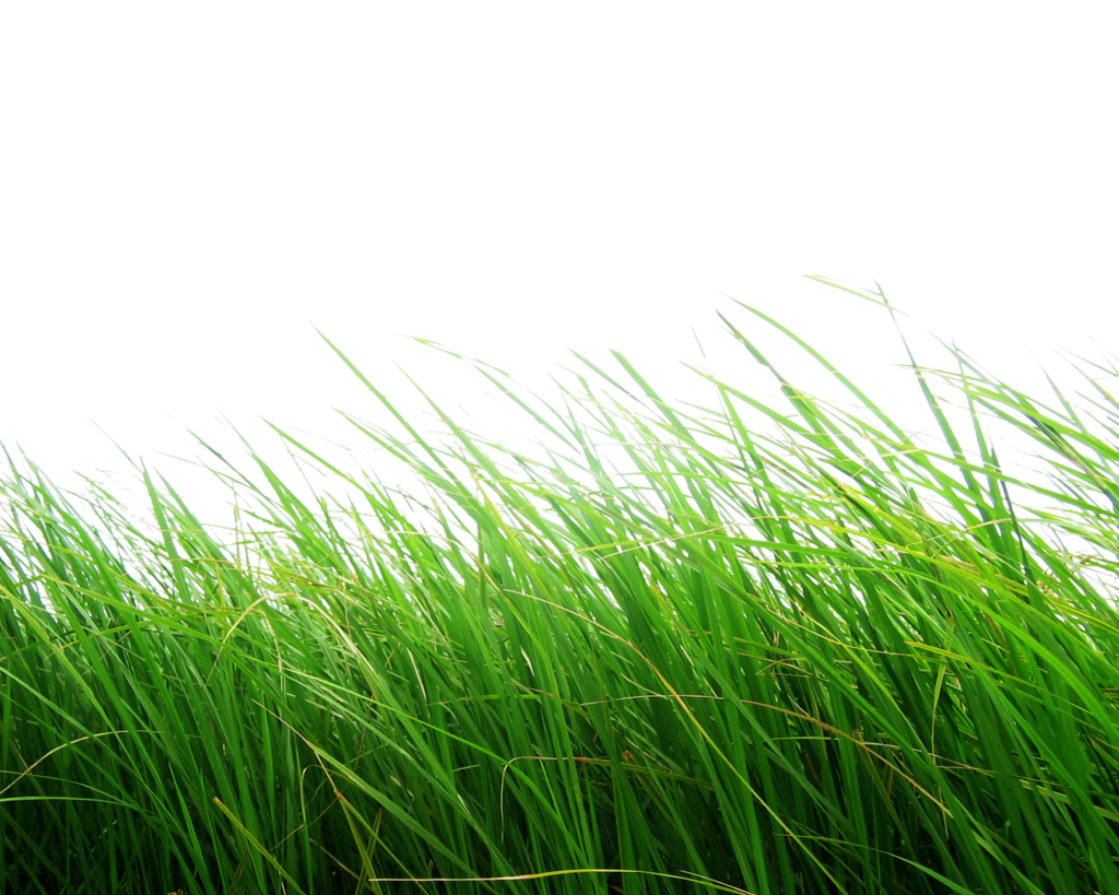 Grass photoshop png. By moonglowlilly deviantart com