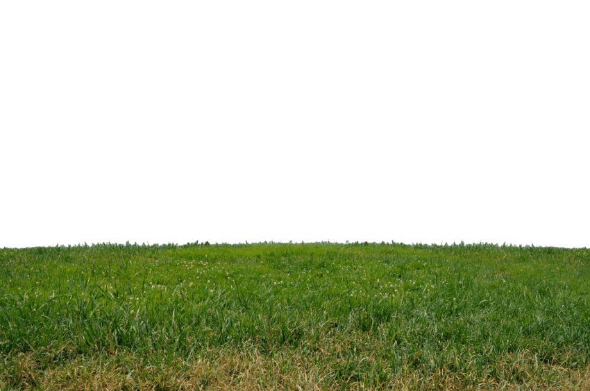 Grass photoshop png. Free images toppng transparent