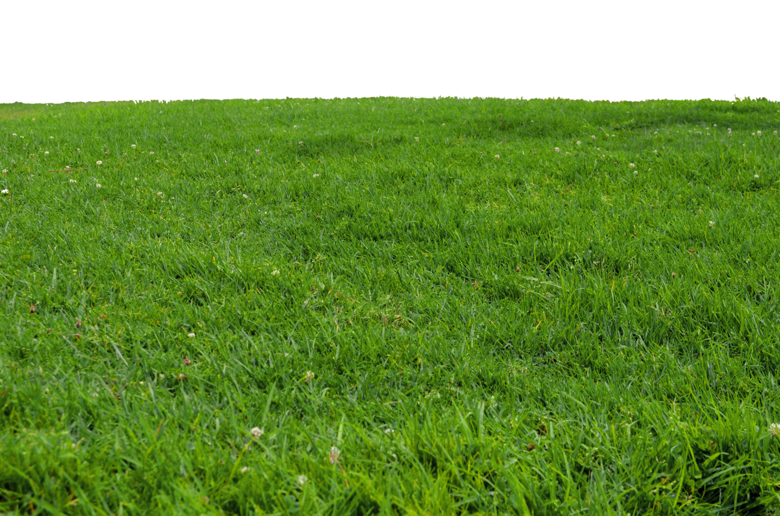 Grass photoshop png. At park stock photo