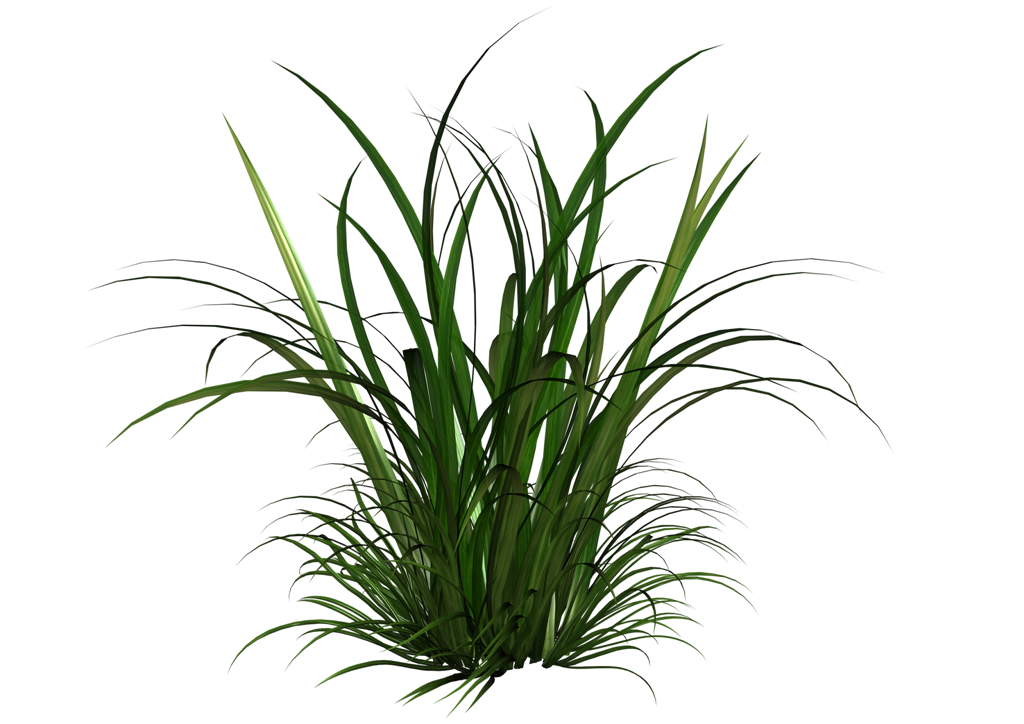 Swamp vector marsh grass. Tall transparent png pictures