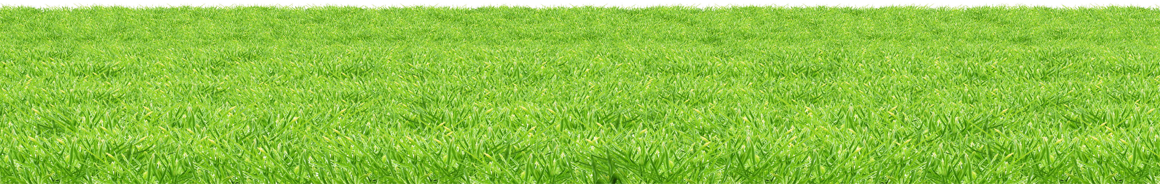 Grass png. Download image green picture
