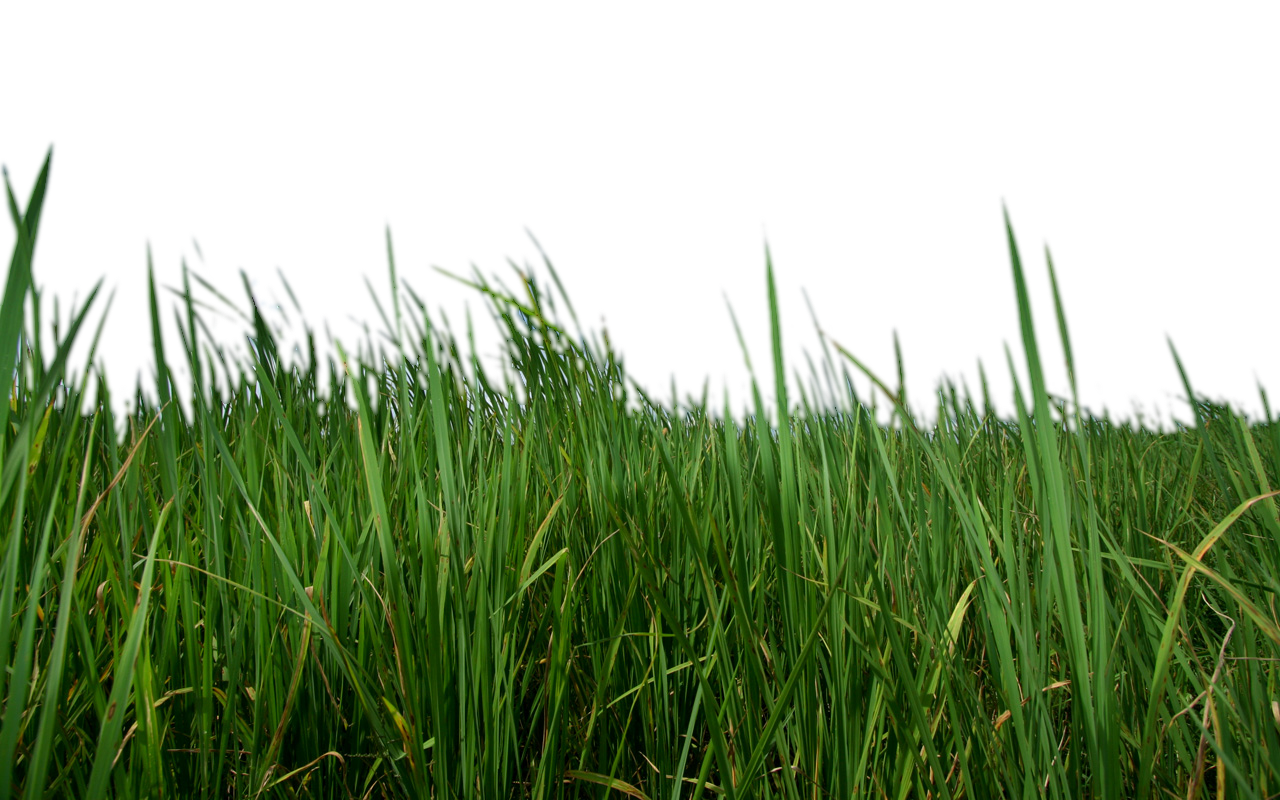 Grass .png. Png images free download