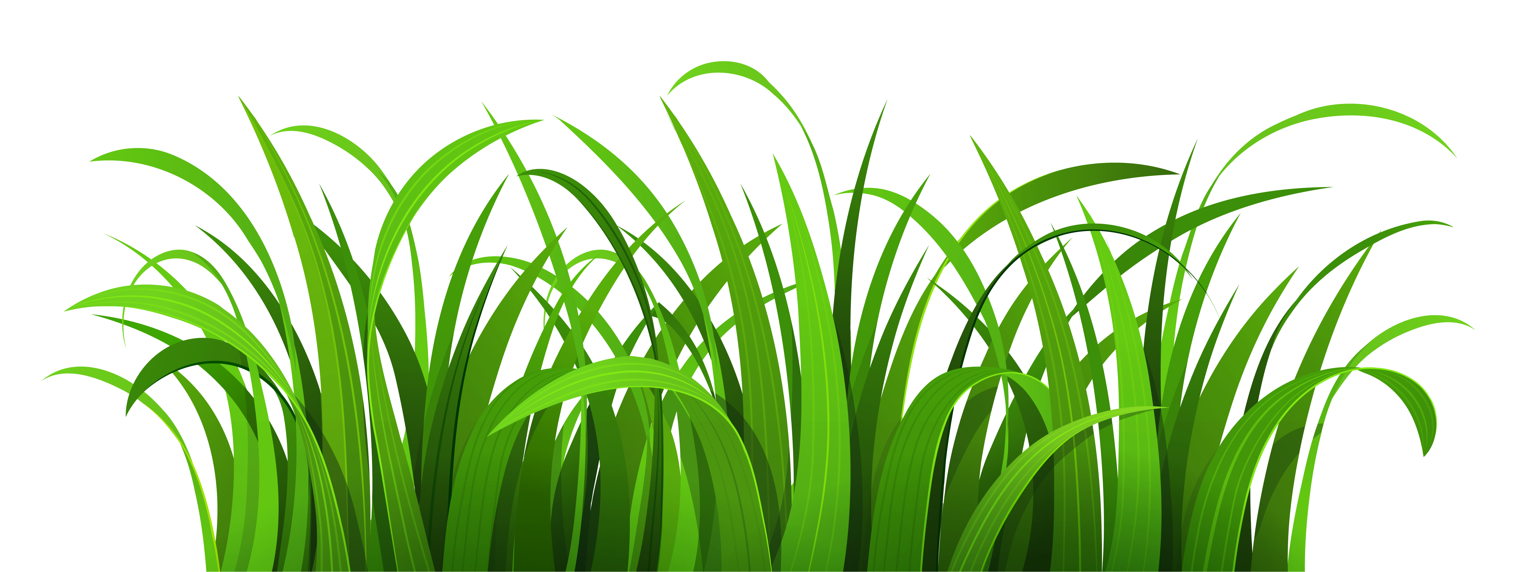 Grass png cartoon. Patch clipart gallery yopriceville