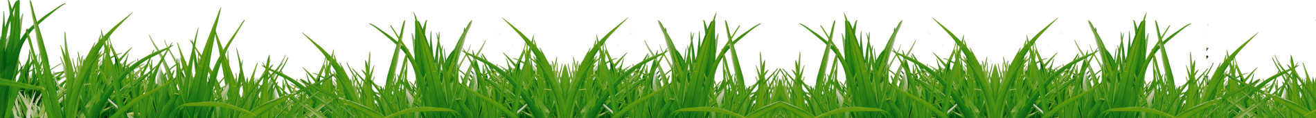 Grass png images. Pictures image green picture