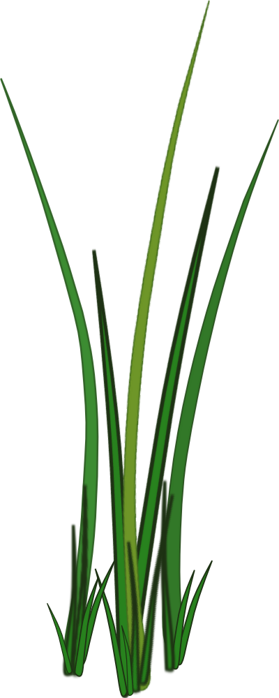 Grass png texture. For tubes sharecg view