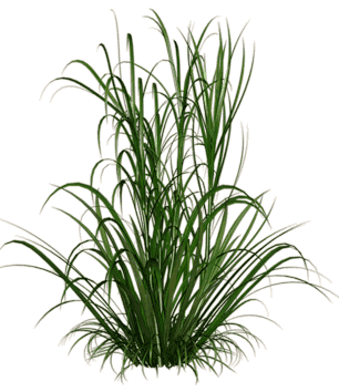 Grass texture png. Tall image