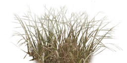 Grass texture png. Tall free icons and