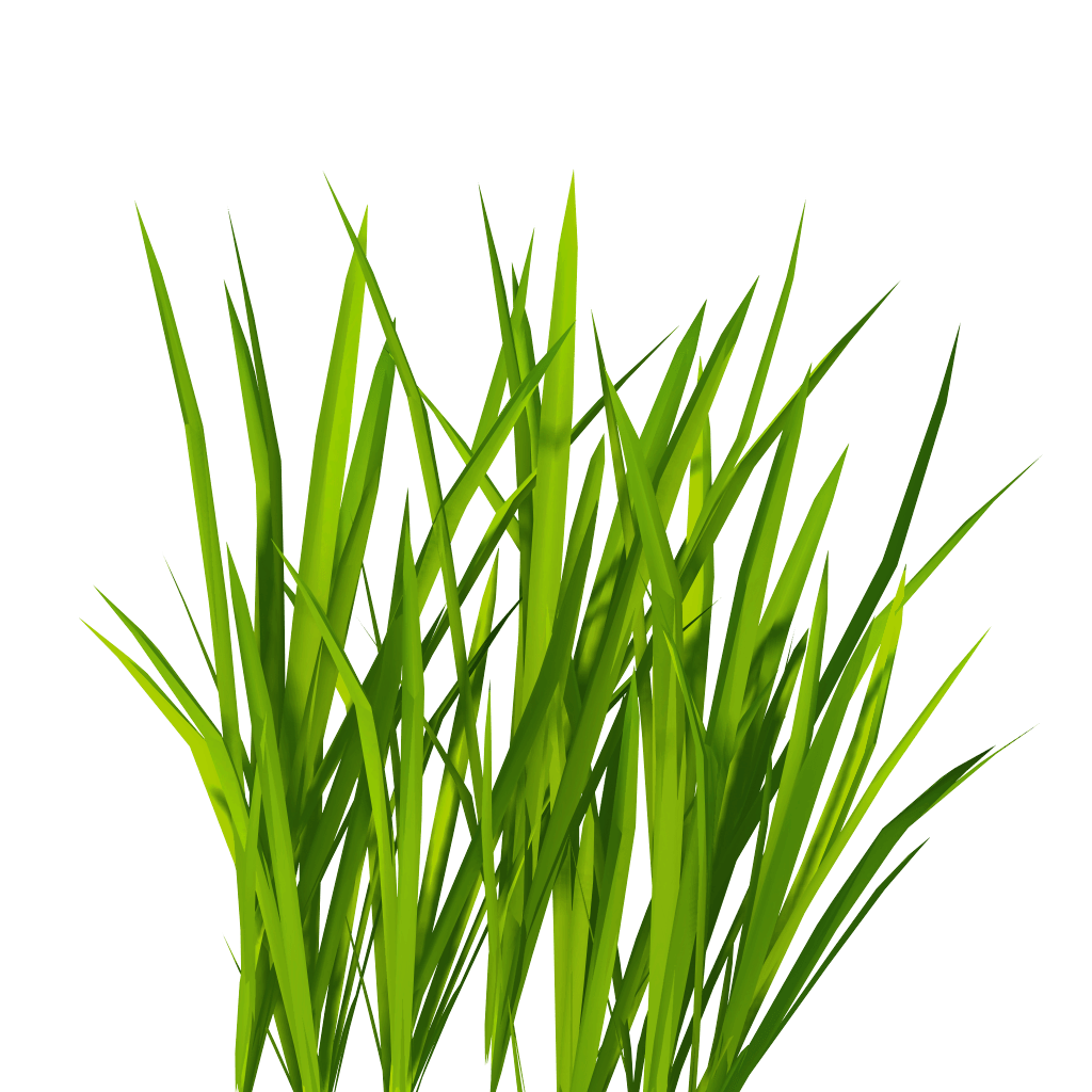 Grass texture png. Image green picture