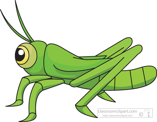 Grasshopper clipart. Insect insects classroom clip
