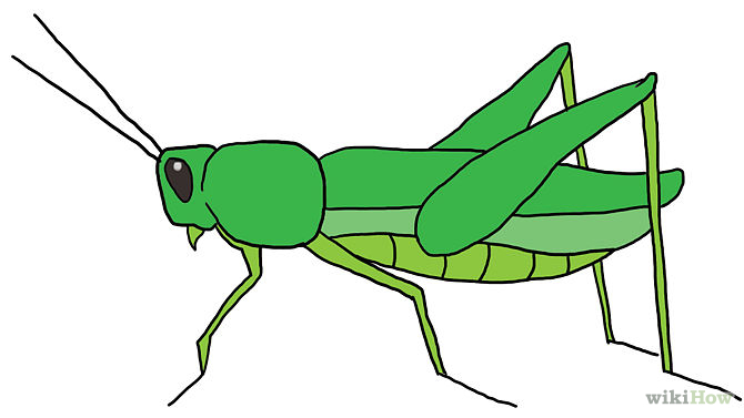 Grasshopper clipart. Mesmerizing how to draw