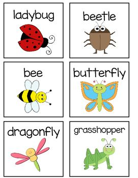 Grasshopper clipart beetle. Insect vocabulary including ant