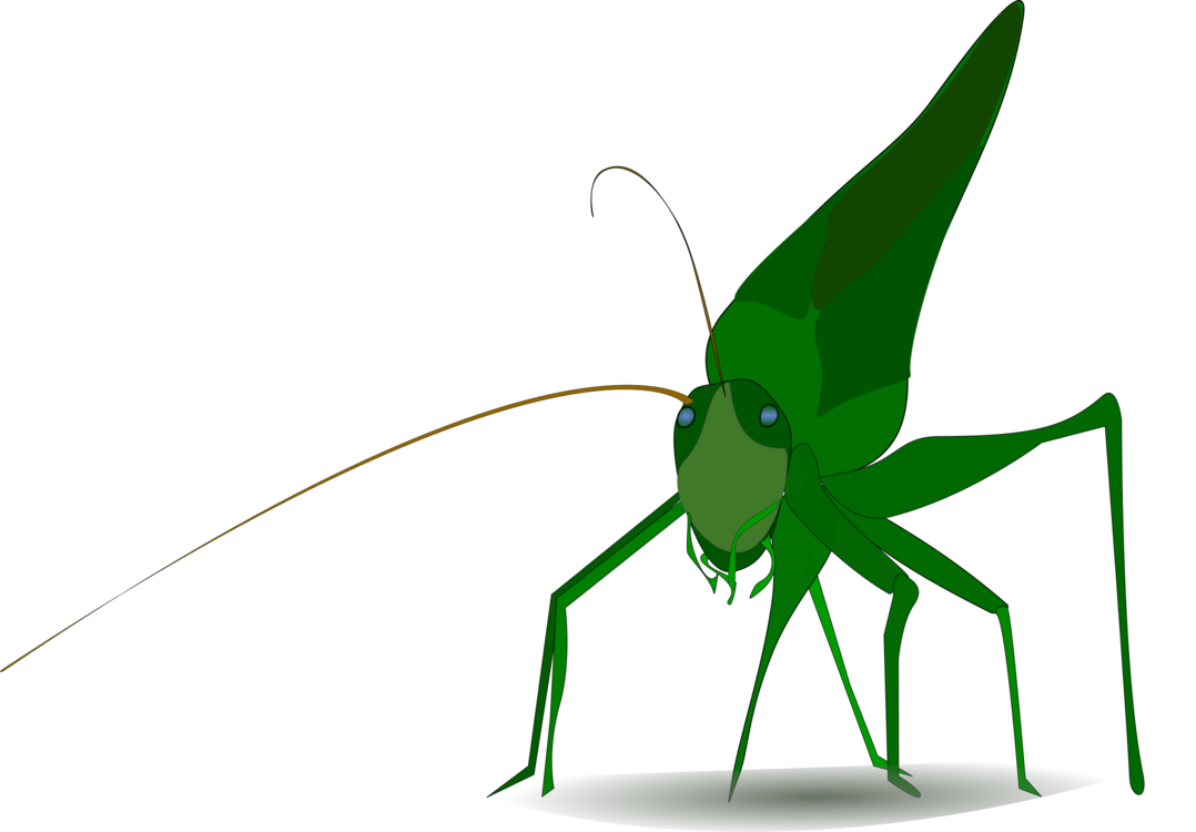 Bugs vector cricket. Insect grasshopper cartoon drawing