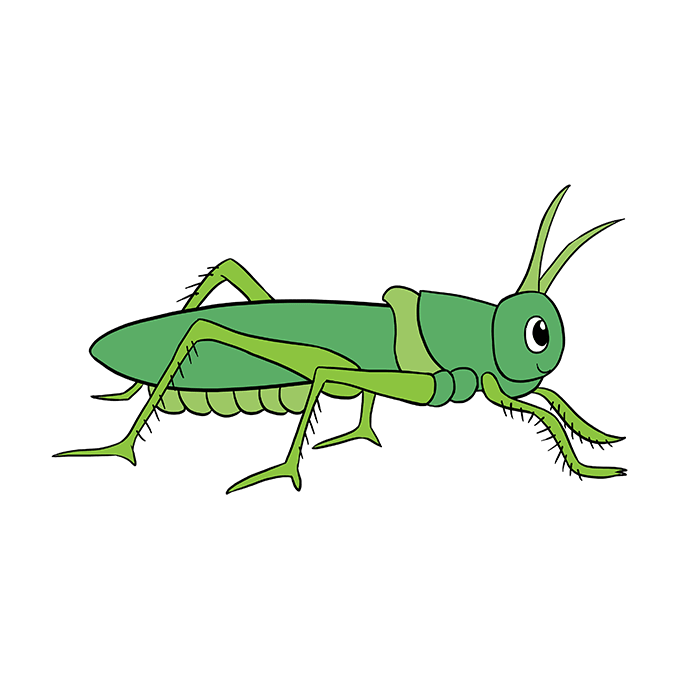 Grasshopper vector food chain. How to draw a