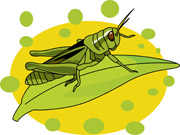 Grasshopper clipart leaf. Search results for clip