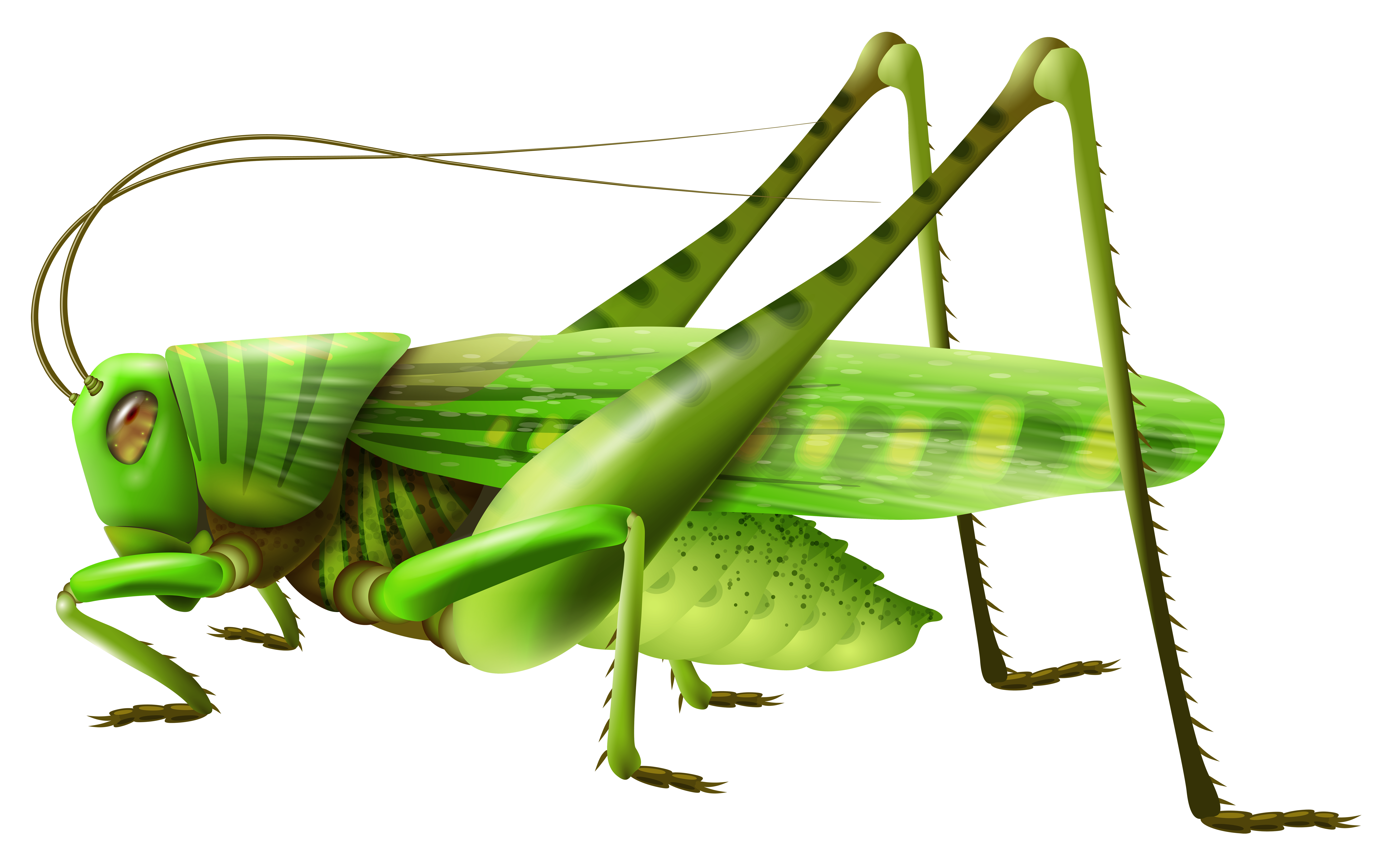 Grasshopper vector mantis. Png images free download