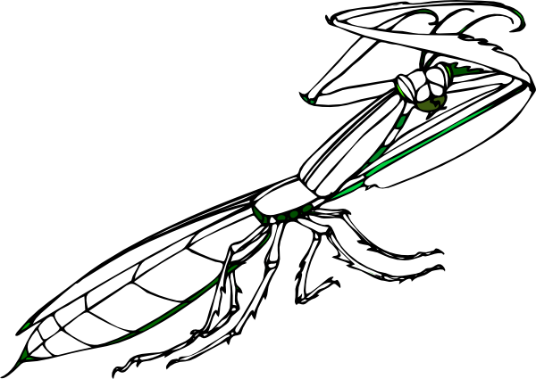 Grasshopper vector mantis. Free praying clipart download