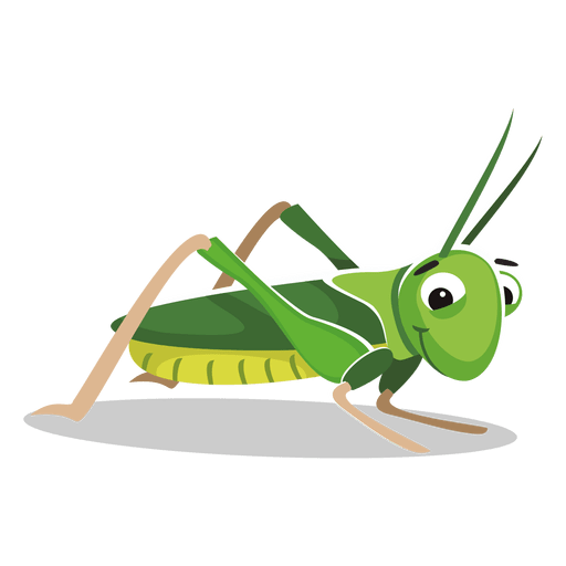 grasshopper vector cricket insect