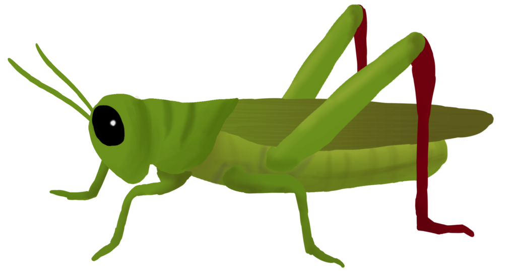 grasshopper vector mantis