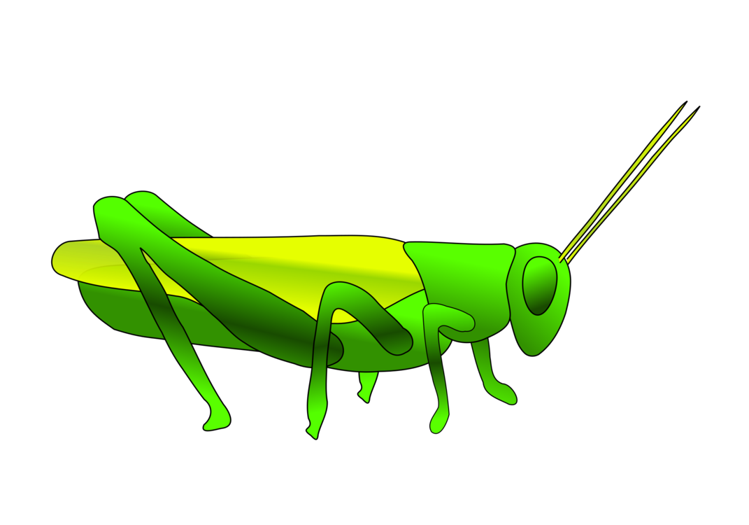 Grasshopper vector ant. Insect the and locust