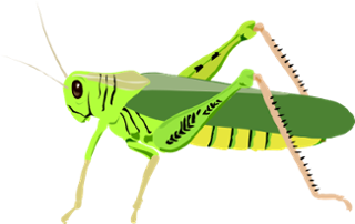 Grasshopper vector food chain. Deciduous forest thinglink the