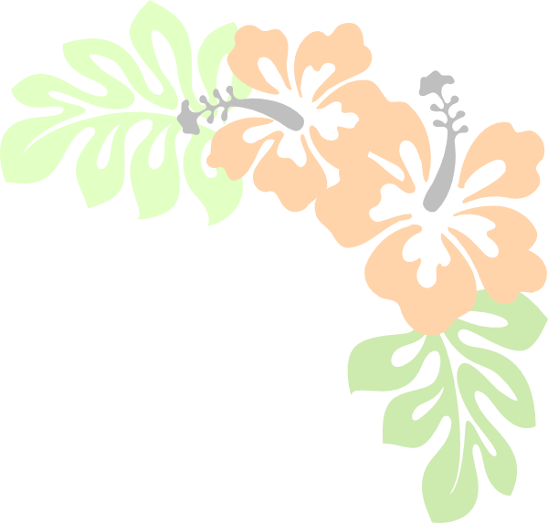 Gray peach. Hibiscus png clip arts